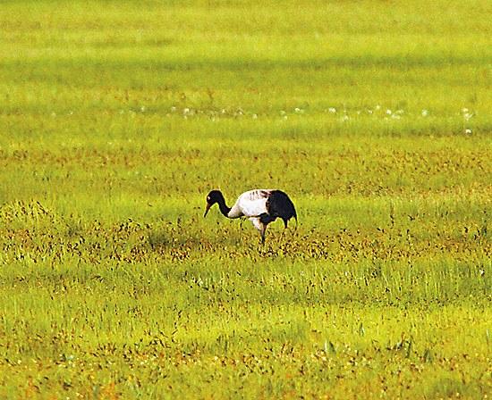 野生动物毁坏庄稼如何补偿 动物保护法亟待修改