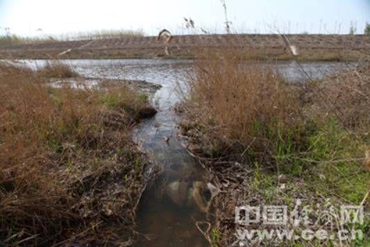 酸性污水在桃城区大西野营村附近流入滏阳河