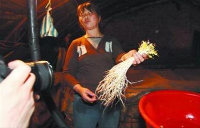 生产豆芽的田女士一再强调,她手里的豆芽已经生长了1个月了。 首席记者 查金辉 摄