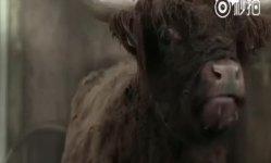 有趣的公益广告 如果有驴可以导盲的话
