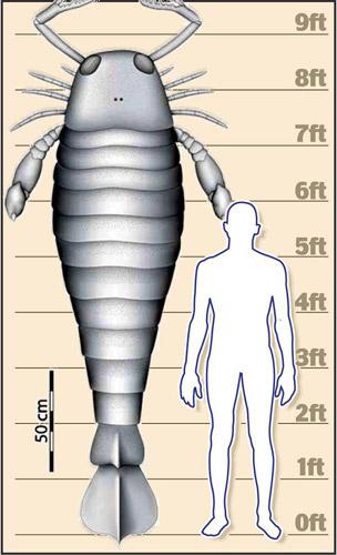[独家]3亿年前巨型蝎子体重超200公斤(图)