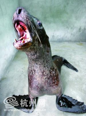 深海中最可爱的动物图片