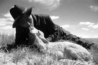 藏羚羊:可爱的高原精灵