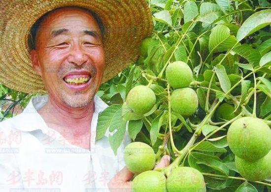 """""""退休教师成核桃专家发展立体种植年入近百万"""""""