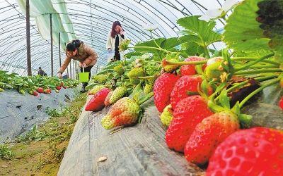 草莓红绳编织图解步骤