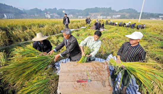 袁隆平超级稻亩产1026公斤