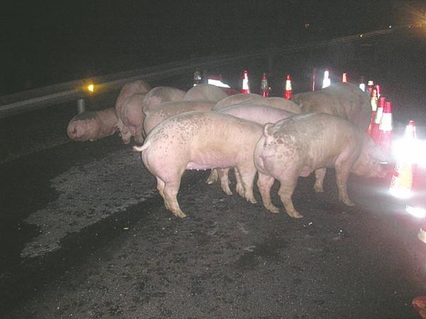 梦见猪圈里有一群小猪