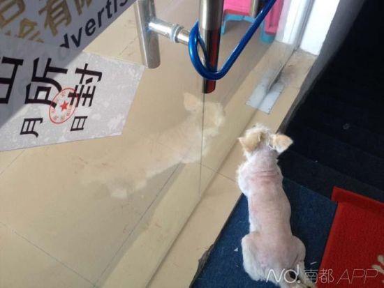 凶案发作地,狗狗守在玻璃门口不肯拜别。
