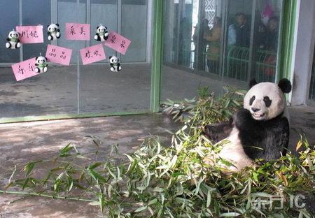 组图:济南动物园熊猫向市民征集昵称揭晓