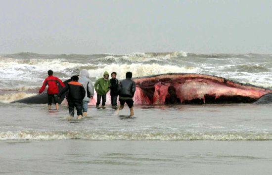 组图:学生冲进海里看鲸鱼