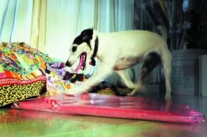 猎犬5国开20次画展作品卖出上千美元(组图)
