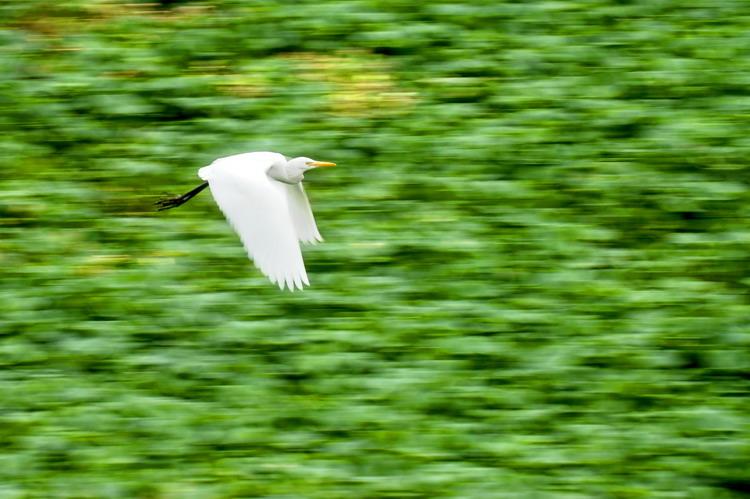 飞行动物寻找伴侣图片。