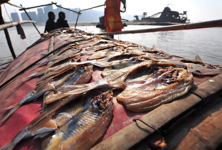 图文:渔民们将鱼用盐腌后放在弓棚上晒图片