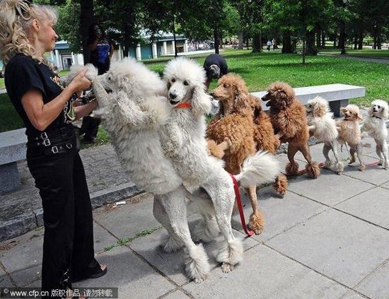 小狗:美国马戏团表演者带组图在街头练习视频v小狗崇明特技图片