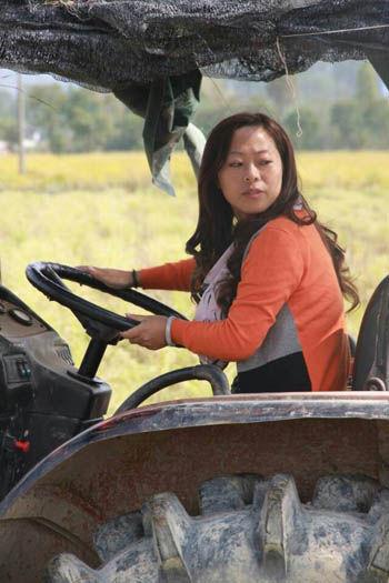 稻田里,杨娇阳在开拖拉机运粮。