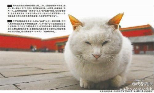 故宫流浪猫