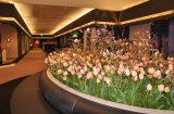 24届TEFAF现场图片:据说展会摆放了当地三分之一产量的郁金香