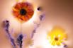 光电花朵美轮美奂