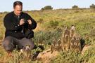游客近距离观察猫鼬