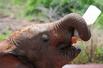 肯尼亚大象孤儿院