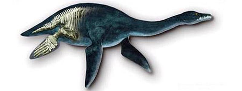 这种史前海洋动物的体长可达15米,撕咬力惊人   中国日报网环球在线消息:一个挪威科研小组2月27日称,他们在北极岛屿上发现的距今1.5亿年的海洋爬行动物化石是迄今发现的最大的上龙,这种生活在恐龙时代凶猛异常的海怪体长约15米,牙齿巨大,撕咬力惊人,可一口吞下一辆小轿车。   据英国媒体报道,挪威奥斯陆自然历史博物馆古生物学者约恩胡鲁姆领导的科研小组2006年首次在斯匹次卑尔根岛(挪威斯瓦尔巴特群岛的组成部分)上、距北极约1300公里处的永久冻结带内发现了这具已经有1.