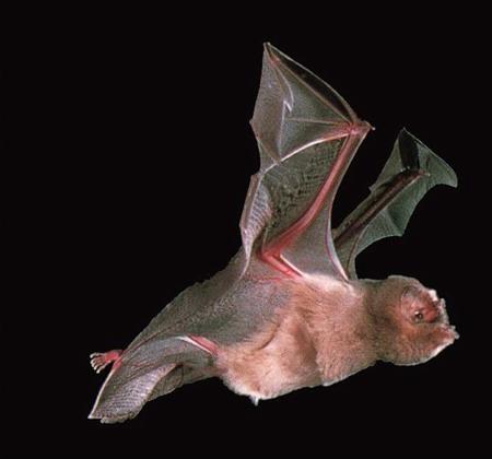 委内瑞拉38人被吸血蝙蝠咬伤后身亡
