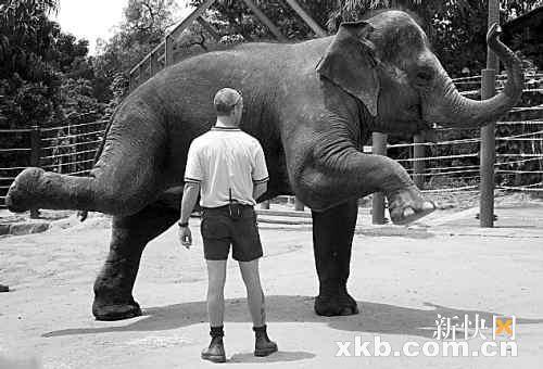 老头子强奸幼女操逼囹�a�l#�+_德国大象做孕妇操