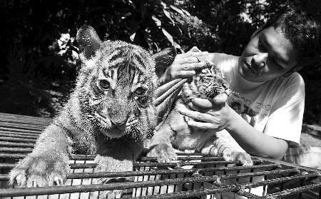 养老虎当宠物