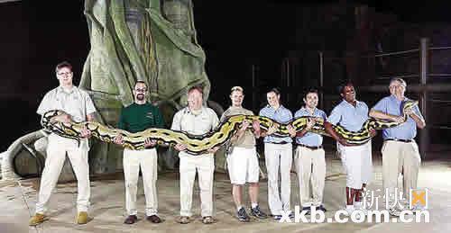 刚载入吉尼斯世界纪录 全球最长圈养蛇死亡