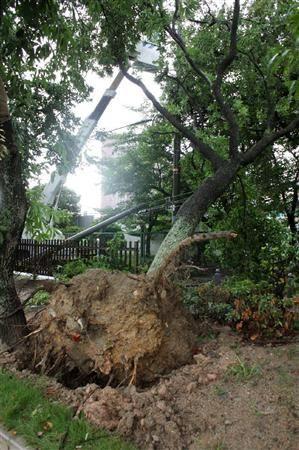 龙卷风将公园大树连根拔起