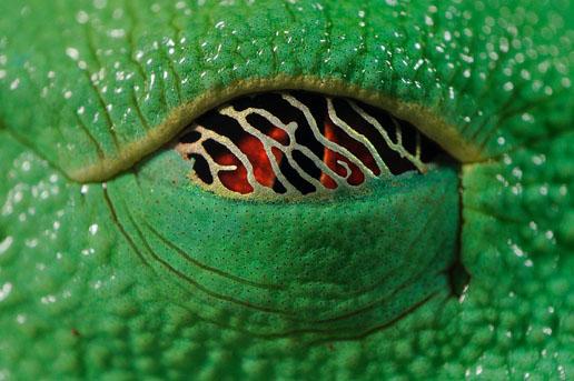 组图:自然组图三等奖-动物眼睛(3)