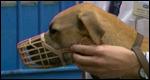 A dog wearing a muzzle