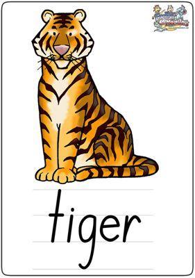 """英语学习卡片""""tiger"""""""