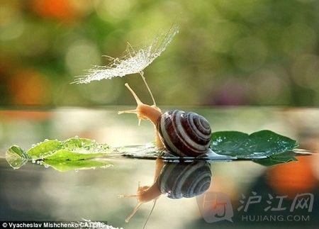 世界上最可爱的生物之列