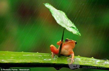双语:印尼摄影师摆拍树蛙打伞遭吐槽