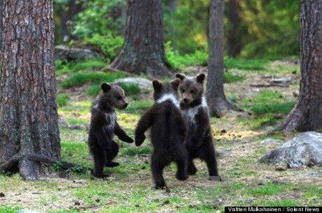 三只小熊跳舞