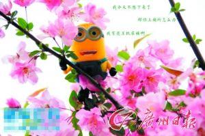 小黄人趴在樱花树上不肯下来。
