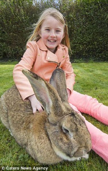 双语揭秘:全世界最大的兔子有多大