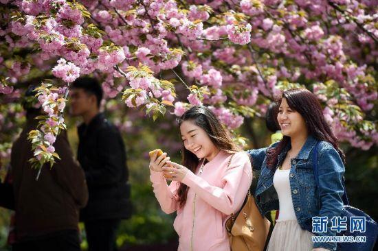 4月8日,游人在樱花树下拍照。近日,在位于安徽合肥的中国科学技术大学校园内,百余株樱花盛开,吸引不少师生和市民前来观赏。