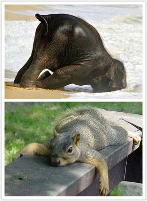 双语:搞怪萌 动物千奇百怪的神睡姿(图)