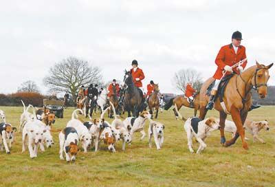 搞笑刺激:英国人跟着臭袜子猎狐(图)