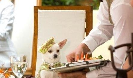 08年电影角色时尚之最:吉娃娃狗(组图)