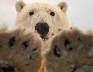 """歇后语测试:""""狗熊的脾气""""是什么"""