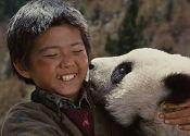 小卢与小熊猫成为了好朋友