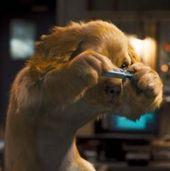 《猫狗大战2》(真人动画)2010年7月30日上映