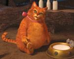 第四集:超重猫