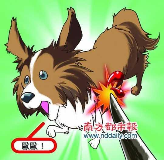 狗狗被捅示意图
