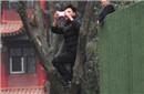 市民爬树追《跑男》