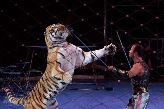 资料图片:俄罗斯莫斯科大马戏团演出照(18)闪电视频特效图片