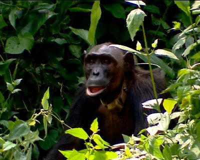 动物与自然电影周展映电影:《人与动物》